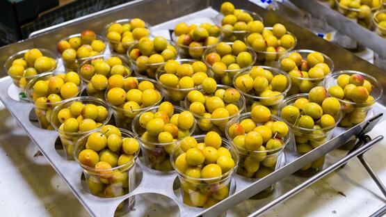 Mirabelles de Lorraine en shaker (fruits frais)